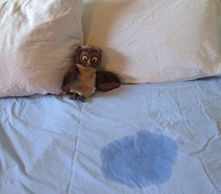 Wet bed sheets in a child's bed, copyright 2019 Parenting Science