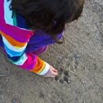 A little girl studying an animal track - a canine paw print - left in dirt.