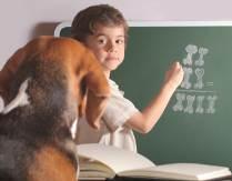 dog-math.jpg.pagespeed.ce.J1BHCmZuzB.jpg