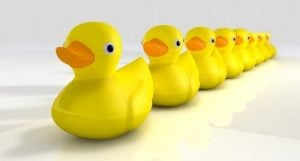 xwhen-does-peer-pressure-start-ducks-in-row-allanswart-istock-500x.jpg.pagespeed.ic._nIelZc3QB.jpg